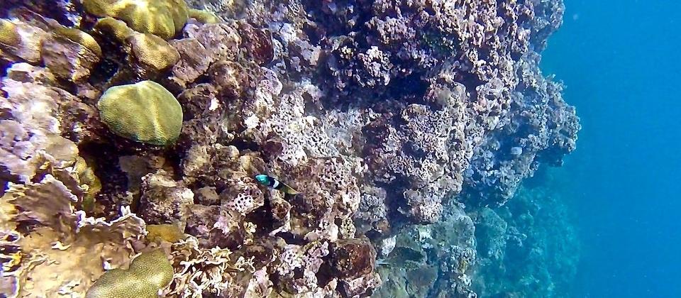 Snorkelling en El Manglito Baracoa Cuba