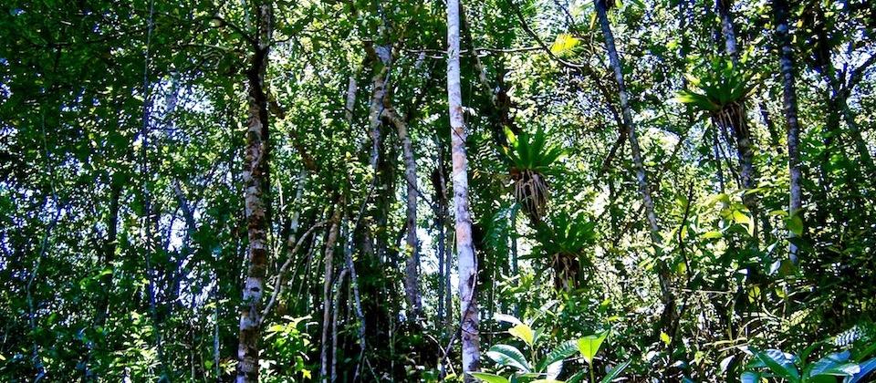 Bromeliáceas • Bromeliads • Broméliacées Baracoa Cuba