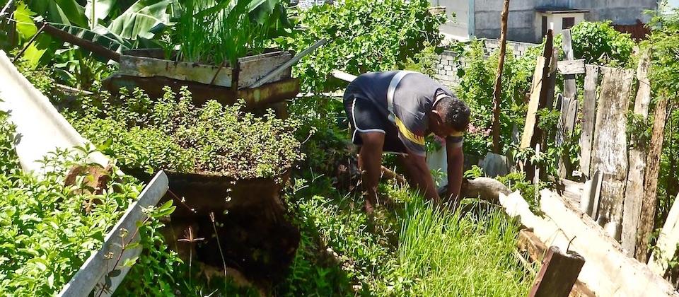 Organopónico • Organic garden • Jardin bio – Baracoa, Cuba