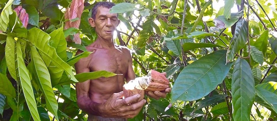 Cocoa grower Baracoa Cuba Cacao