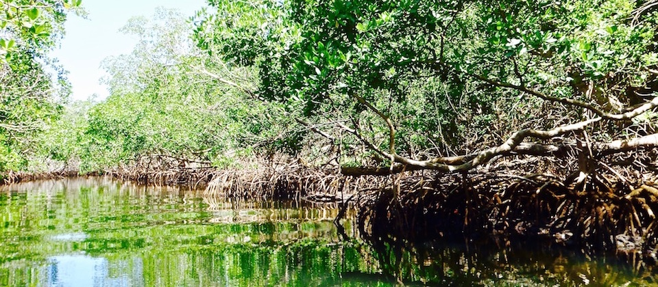 Baie de Taco Bay (3) • Humboldt Park • Baracoa Cuba