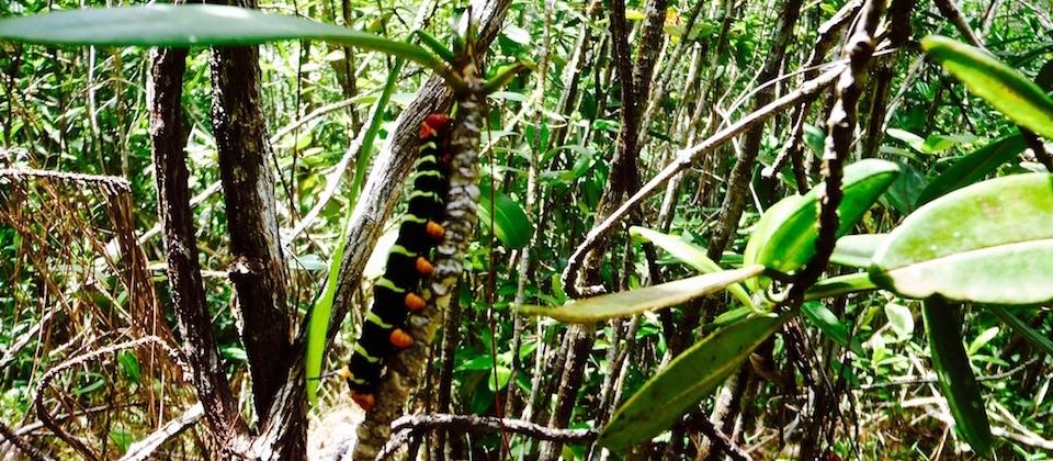 Caterpillar • Parc Humboldt Park • Baracoa Cuba