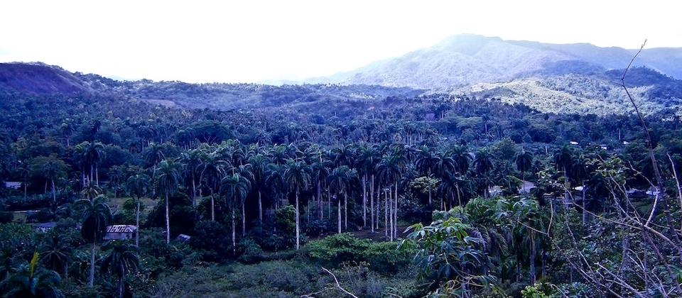 El Copal (1) • Parc Humboldt Park • Baracoa Cuba