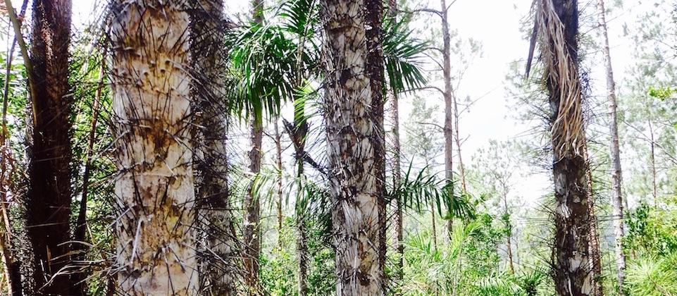 El Recreo (1) • Parque Humboldt Park • Baracoa Cuba