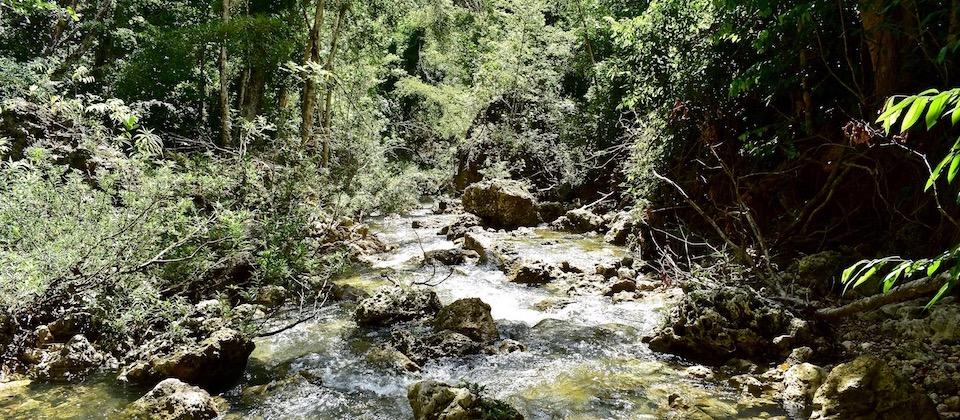 Stream at Rainforest • Yumurí • Baracoa Cuba