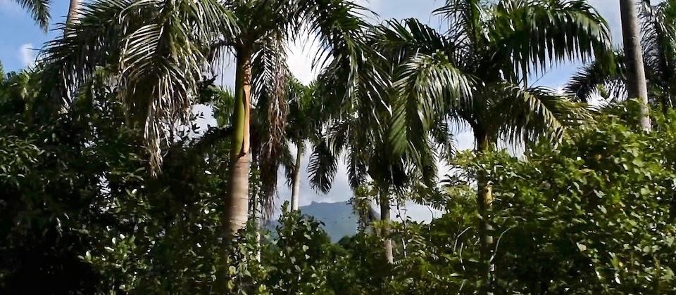 La Farola – Royal palms – Santiago de Cuba to Baracoa