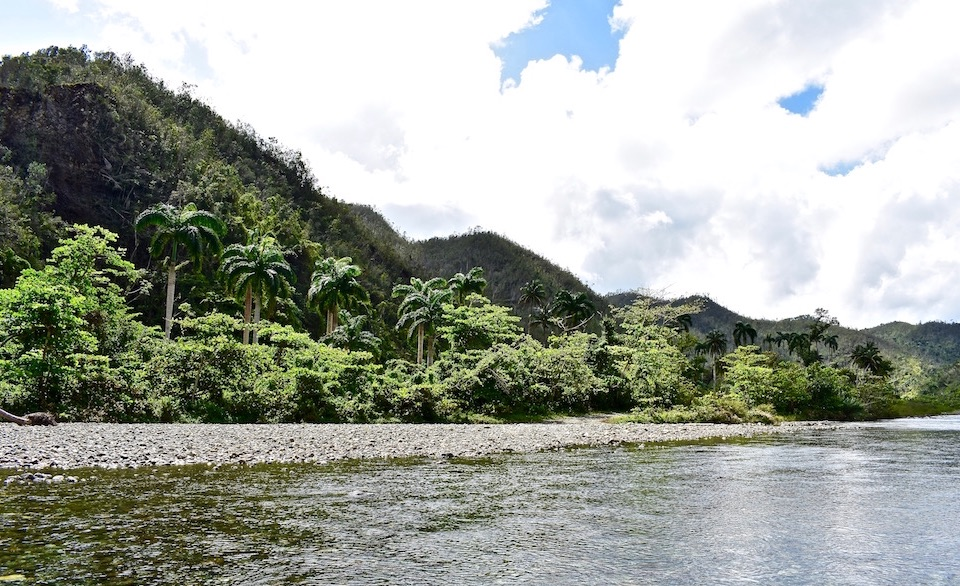 Royal Palms on River Las Minas • Baracoa Cuba