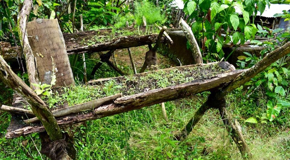 Permaculture • Seeds • Quibijan • Baracoa Cuba