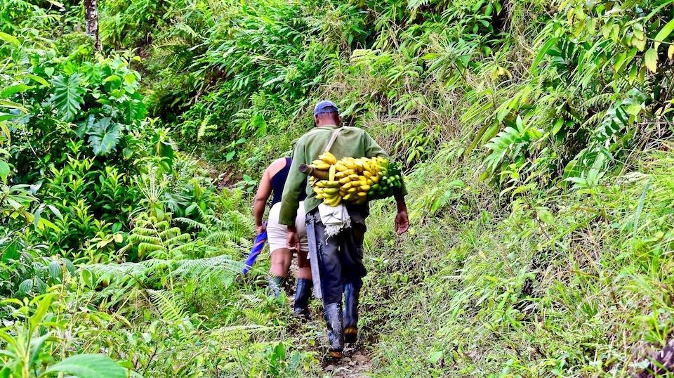 Organic fruit • Quibijan • Baracoa Cuba