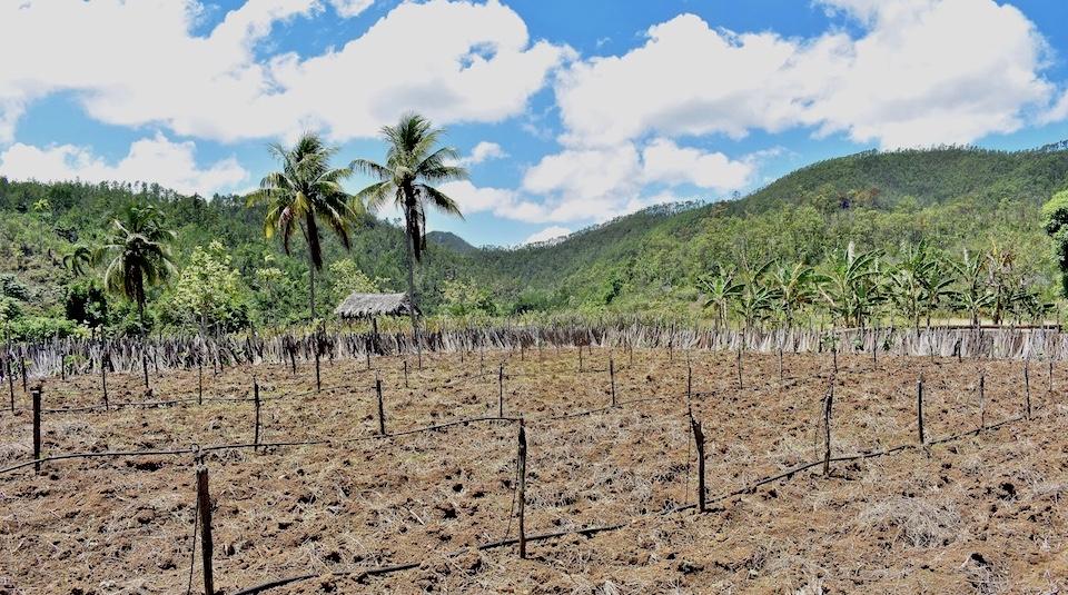 Organic fertilizer • Humboldt Park • Baracoa Cuba