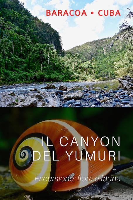Canyon Yumuri Fauna • Baracoa Cuba
