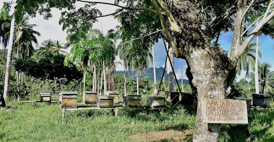 Honey AgriTourism Baracoa Cuba