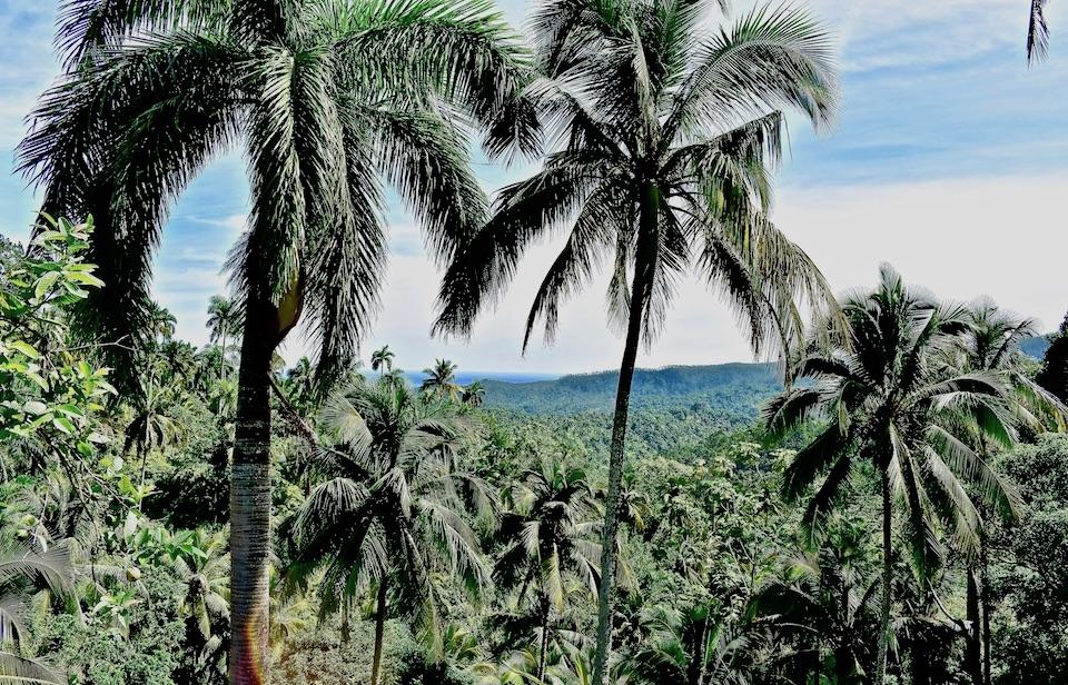 Balcon de Iberia Trail • Baracoa Cuba