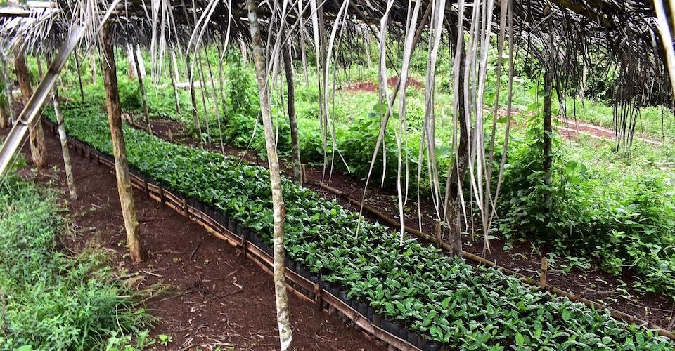 Agritourism Baracoa Cuba