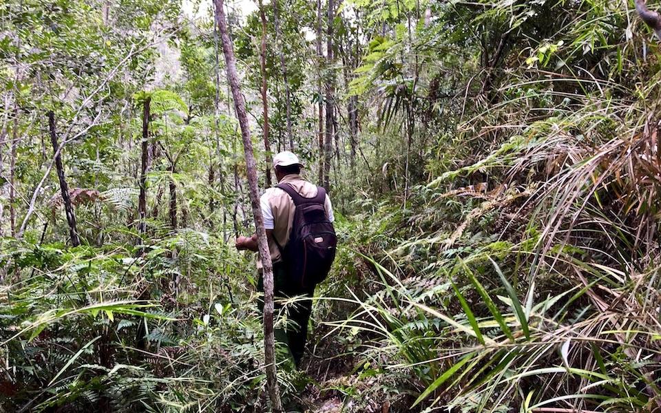 Birding Guide • Alexander Humboldt National Park • Baracoa Cuba