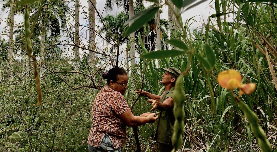 Eco Farming • Agriculture écologique • Baracoa Cuba