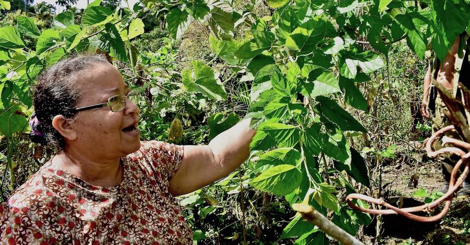 Farm Tourism Baracoa Cuba