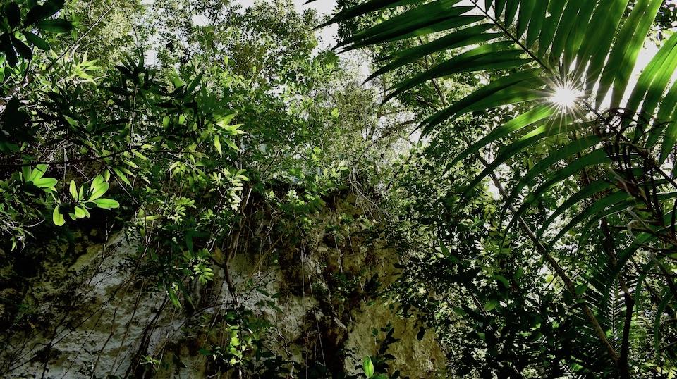 Karst Flora Baracoa Cuba