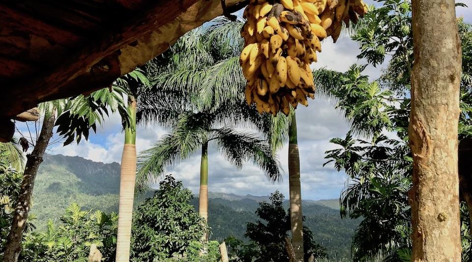 Tourisme gourmand gourmet Tourism Baracoa Cuba