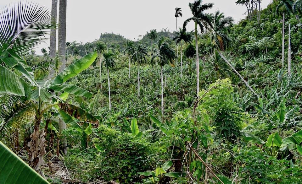 Finca ecológica Baracoa Cuba Eco Farm Ferme écologique