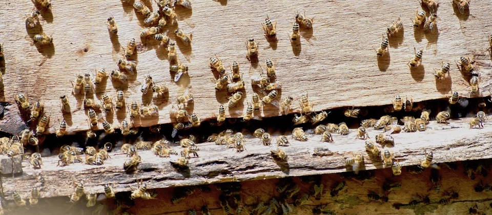 Apiculture Cuba Beekeeping Apicultura Baracoa
