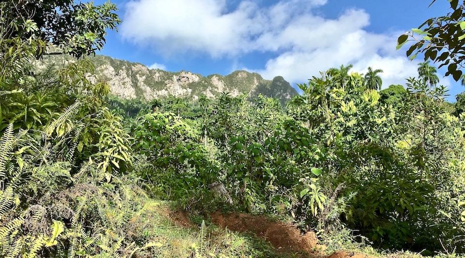 El Yunque Baracoa Cuba Honey Miel