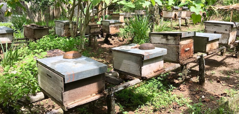 Cuba Honey Bee Hives Baracoa Miel