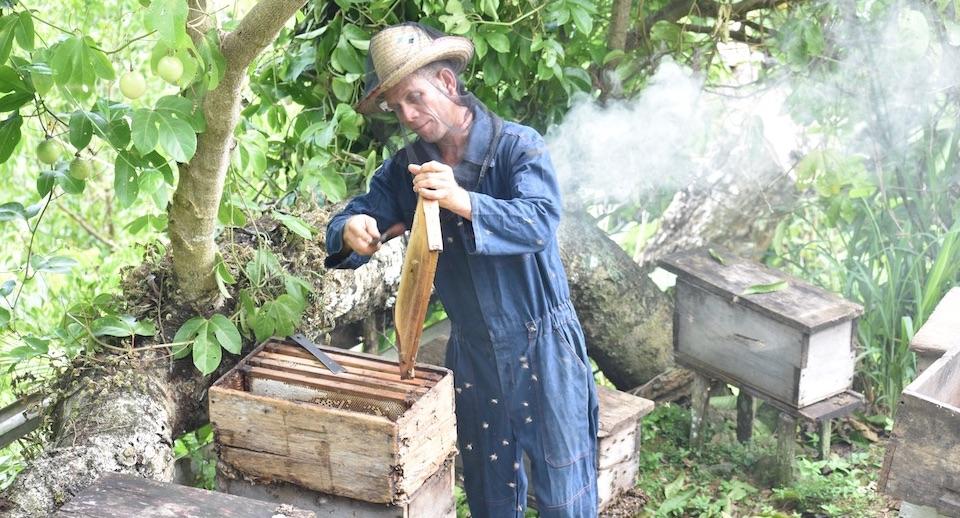 Miel Cuba Apiculteur Baracoa Honey