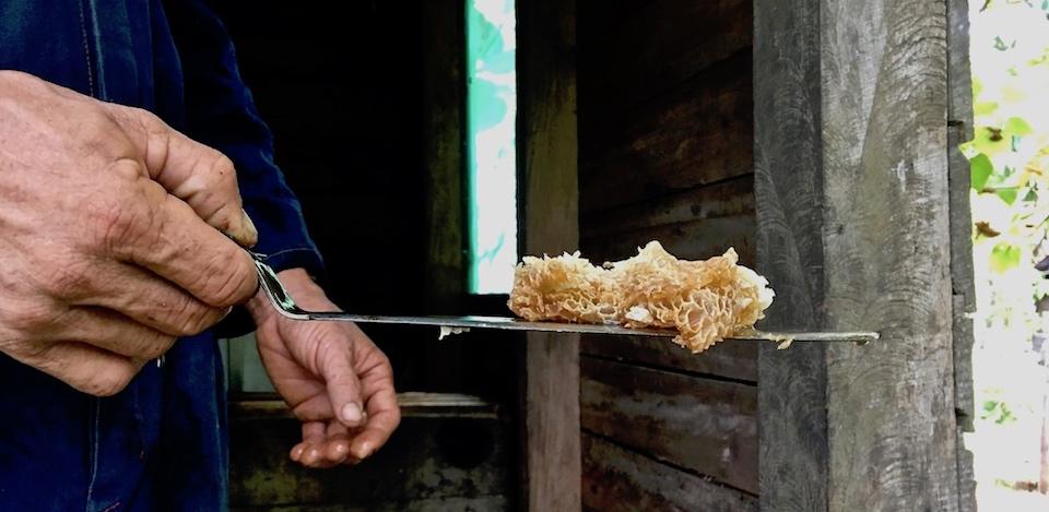 Miel Cuba Honeycomb Baracoa