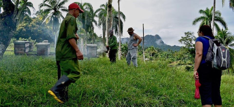 Cuban Honey Baracoa • Miel Cuba Baracoa