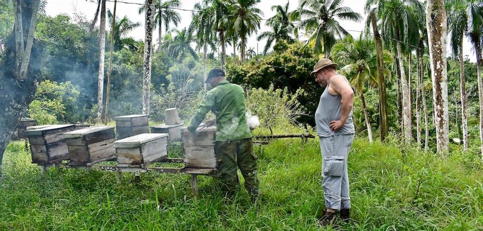 Miel Cuba Baracoa • Honey