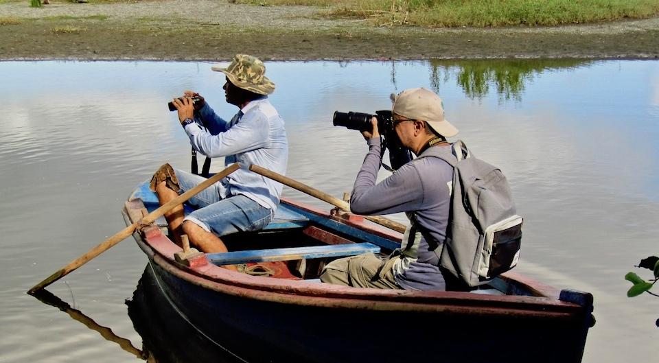 Birdwatching Ornithologie Oiseaux Birding Baracoa Eastern Cuba Pajareo Aves