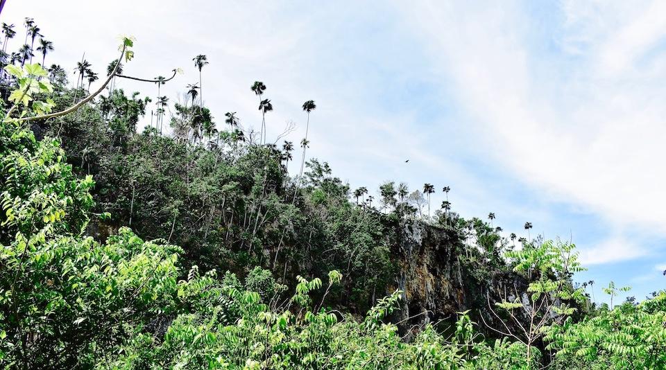 Randonnée paysage karstique Baracoa Cuba