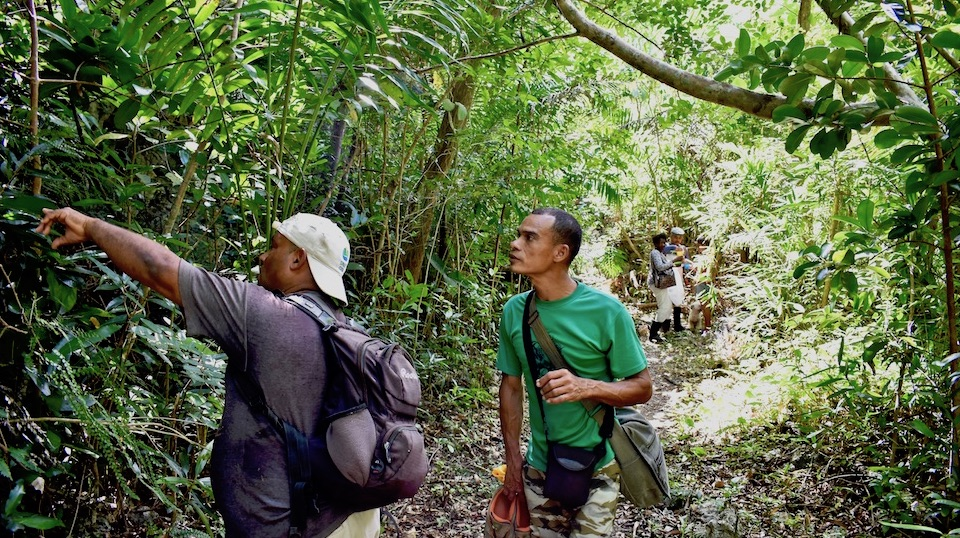 Eastern Cuba Tropical Karst Guided Hike • Yumuri Canyon in Baracoa