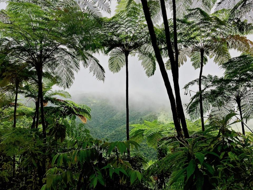 Baracoa Cuba • Cuchillas del Toa Biosphere Reserve